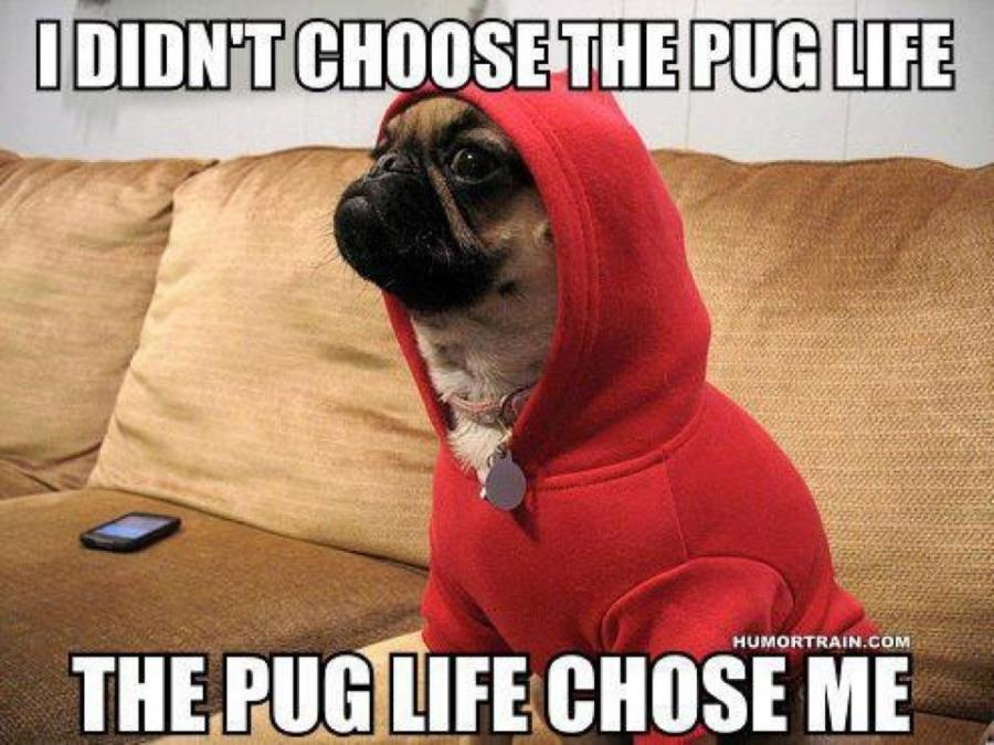 Pug Life… Thuglife